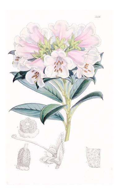 Gardenija, rododendron, zdravac